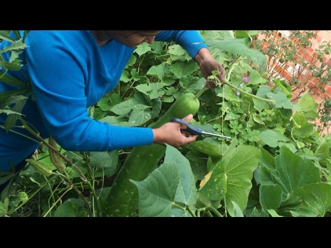 সব্জির বাগান - পর্ব ২ || Vegetables Gardening - Part 2 || 2017
