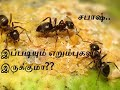 Awesome Creativity Ant   HD1080p