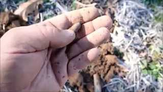getlinkyoutube.com-Dug Out 14 - Some Days Its Chicken ... Some Days Its Feathers!