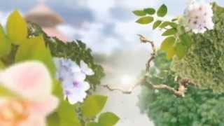 Fondo Video Background Full HD - Álbum de Boda