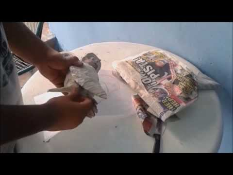 Buho de tierra, tecolote llanero | Figuras de Papel Mache (Shippuden Space Mache)