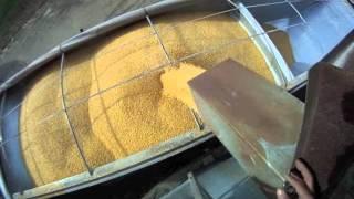 getlinkyoutube.com-Loading Semi Hopper Bottom with Corn and Hauling to Ethanol Plant 11-3-2011