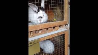getlinkyoutube.com-Мини Ферма по разведению кроликов