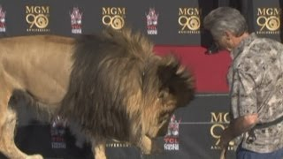 getlinkyoutube.com-Leo the Lion helps MGM Studios celebrate its 90th birthday