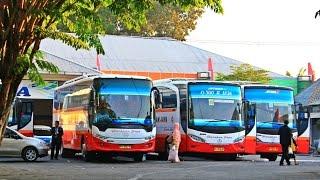 getlinkyoutube.com-Rombongan Bus Harapan Jaya keluar RM Duta Ngawi