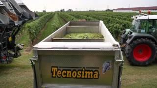 getlinkyoutube.com-Tecnosima 3 assi in inox per trasporto uva