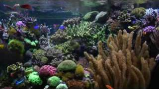 getlinkyoutube.com-Aquariums - David Saxby's Reef Aquarium (extended version)