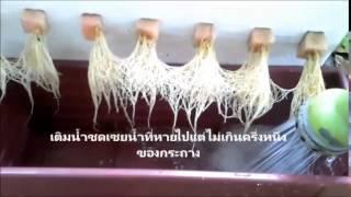 getlinkyoutube.com-ปลูกผักไร้ดิน ตอนเตรียมนำ้&ใส่ปุ๋ย