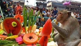 getlinkyoutube.com-The Monkey Buffet Festival - Thailand