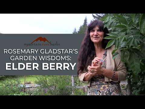 Rosemary Gladstar's Garden Wisdoms - Elderberry Medicine