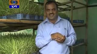 getlinkyoutube.com-Hydroponic fodder Govind Dairy Success story of low cost unit by  broadcasted DDK Pune