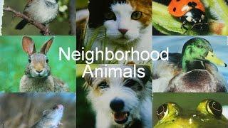 getlinkyoutube.com-Neighborhood Animals