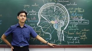 getlinkyoutube.com-อ. เอกฤทธิ์ วีระพันธุ์ ชีววิทยา เรื่อง พันธุศาสตร์ (โครงสร้าง DNA)