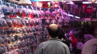 getlinkyoutube.com-Tung Choi Street, Hong Kong (Goldfish Market)