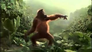 Monkey dance-Funny Video
