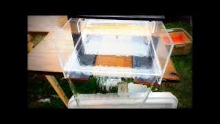 getlinkyoutube.com-SLUICE BOX - UNDERFLOW SLUICE - REEFQEKO 4000