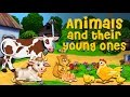 Animals And Their Young Ones | Pre School Learning and Kids Education