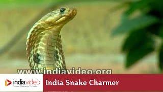 getlinkyoutube.com-India Snake Charmer -  Cobra Snake Tricks!