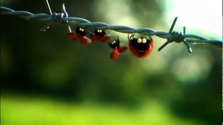 getlinkyoutube.com-طرائف الحشرات الحلقة 55 - Minuscule S1 E55