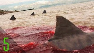 getlinkyoutube.com-5 Most Brutal Real Life Shark Attacks