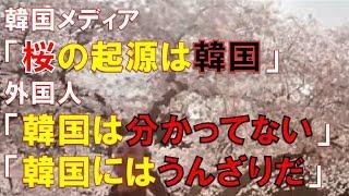 getlinkyoutube.com-【海外の反応】韓国の桜起源説を見た外国人の反応