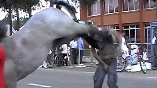 getlinkyoutube.com-DAPS Viral Video Commentary 4 - guy Get Kicked in Face By Horse
