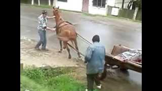 Betivii si calul (romani beti)
