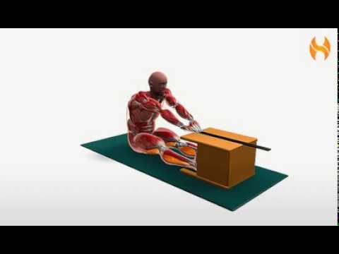 Exercise Videos- Sit-and-Reach Test