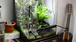 getlinkyoutube.com-Dendrobates auratus vivarium (28.06.2014) [720p HD]