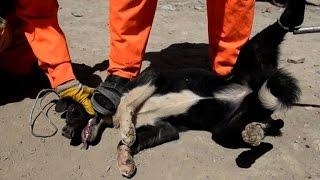 getlinkyoutube.com-القضاء على الكلاب الضالة في شوارع كابول