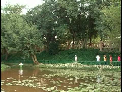 榮星花園  螢火蟲的家
