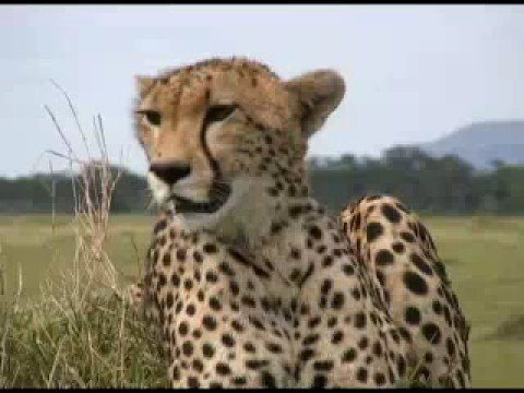 Cheetah - Will It Be Fast Enough?