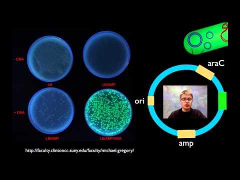 AP Biology Lab 6: Molecular Biology -OZyFX9megs8