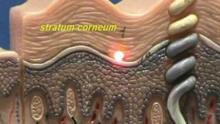 getlinkyoutube.com-Composite Skin Model - Epidermis & Dermis