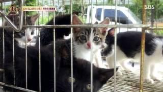 getlinkyoutube.com-TV 동물농장 E695 141228 005