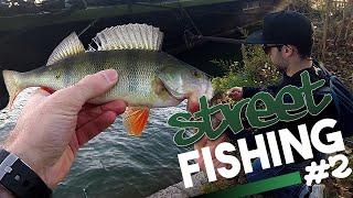 Pêche du brochet et de la perche en Street Fishing à Lyon - [Street Fishing FISHARE]
