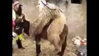 getlinkyoutube.com-mout dyal dahk maroc 2013