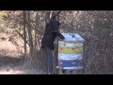 Bees and Beekeeping at the University of Tennessee