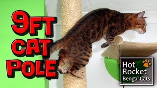 getlinkyoutube.com-9ft tall scratch post – Bengal cats just love to climb
