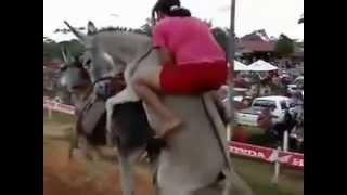 getlinkyoutube.com-El burro felipe caliente en acción
