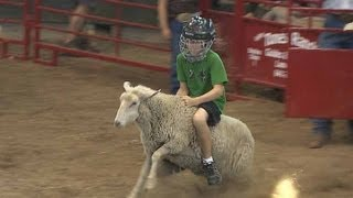 getlinkyoutube.com-Mutton Busting | Iowa State Fair 2012