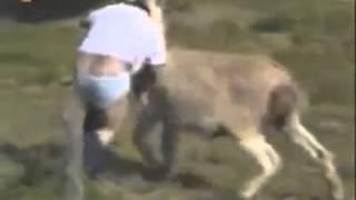 getlinkyoutube.com-El burro violador