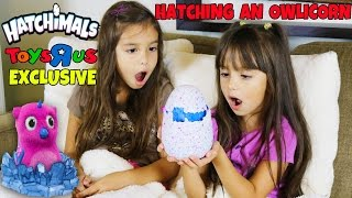 getlinkyoutube.com-HATCHIMALS Hatching an Owlicorn - NEW Toys R Us Exclusive Hatchimal Magical Surprise Egg