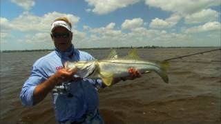 Wading for Monster Snook and Trout