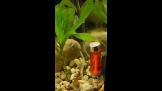 Реактор CO2 из ручки и фильтра от капельницы