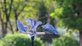 """getlinkyoutube.com-รายการคนเลี้ยงนก ตอนที่ 4 : ฟาร์มฟอร์พัส""""สุดเจ๋ง"""""""