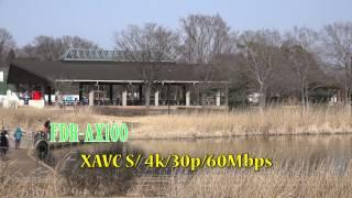 FDR-AXP35 FDR-AX100
