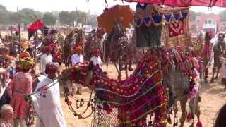 getlinkyoutube.com-Pushkar Camel Fair