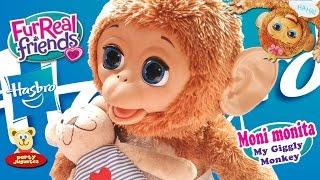 getlinkyoutube.com-MONI MONITA, FurReal Friends, vamos a jugar | Cuddles My giggly Monkey, let's play.