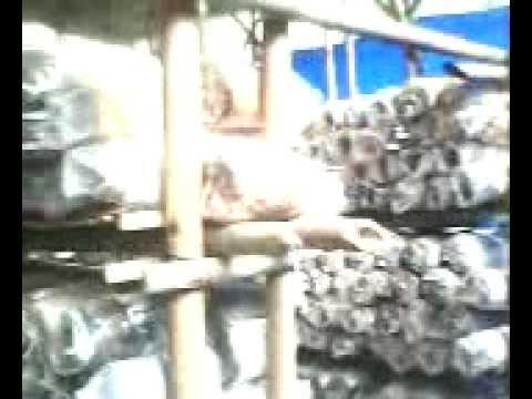 kumbung jamur ruli